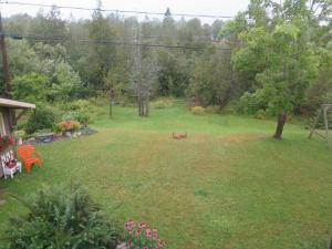 backyard beauties